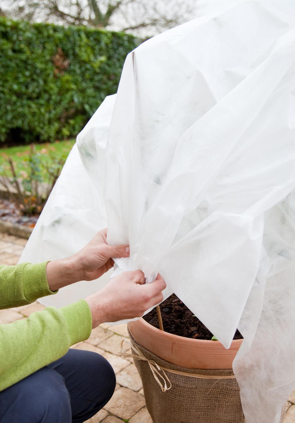 Protéger un citronnier avec un voile d'hivernage