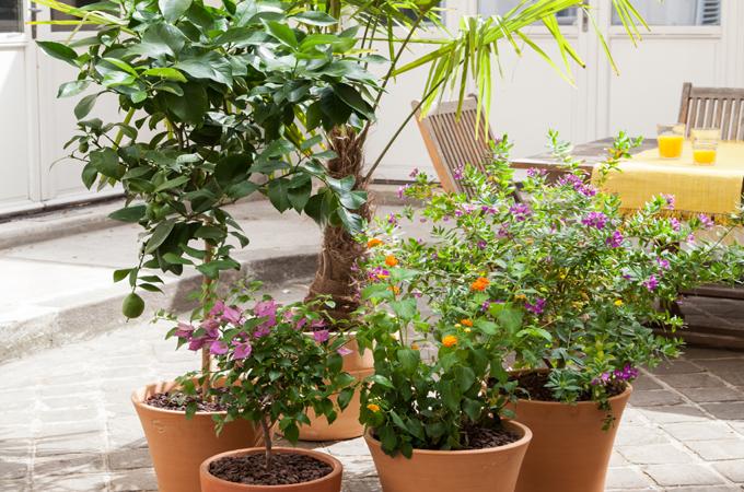 Un jardin mediterraneen en pots