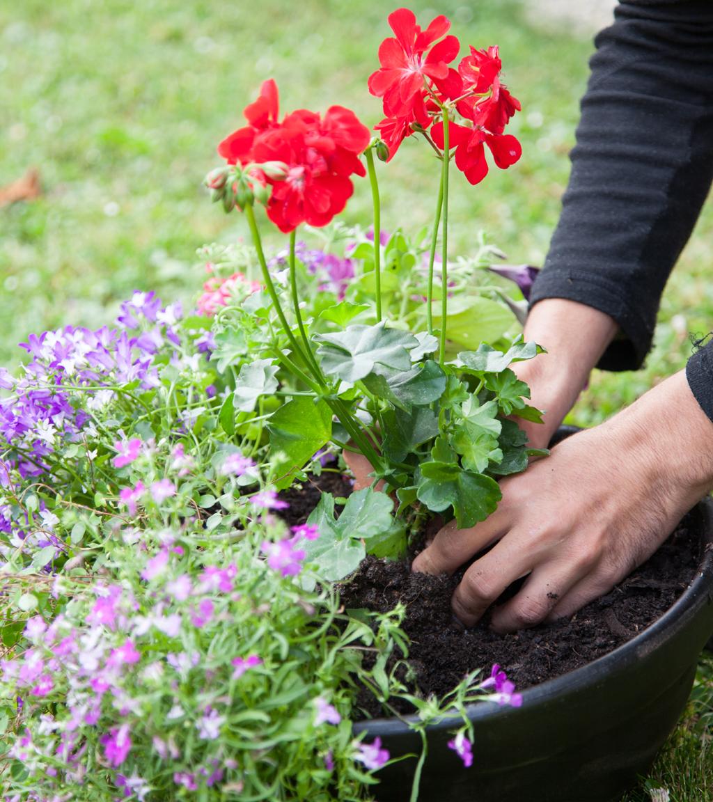 Composer une vasque fleurie