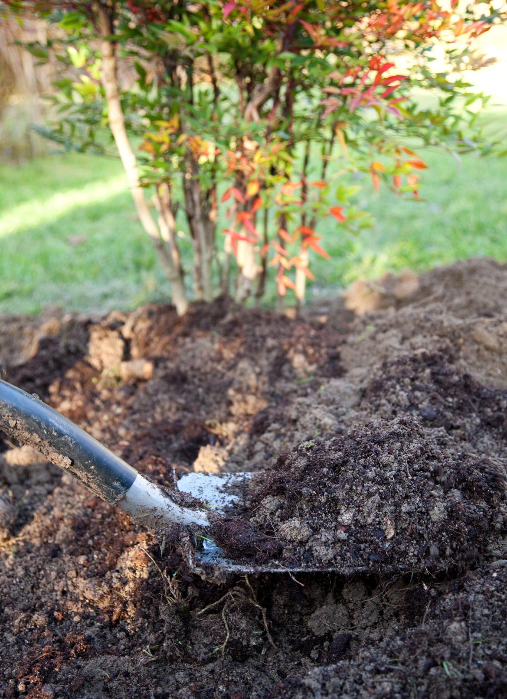 Composer et planter un bosquet pour l'hiver
