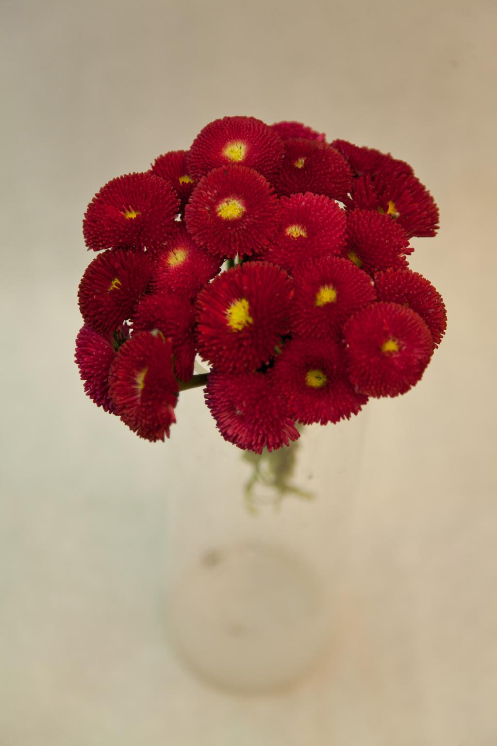 Composer des petits pots floraux