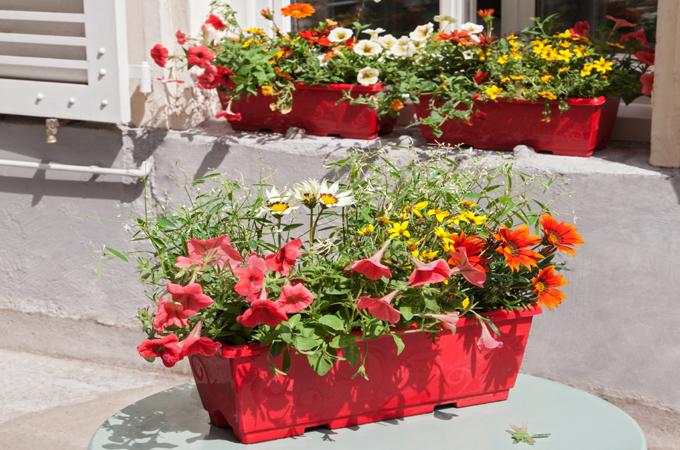 Composer un assortiment de jardinieres :