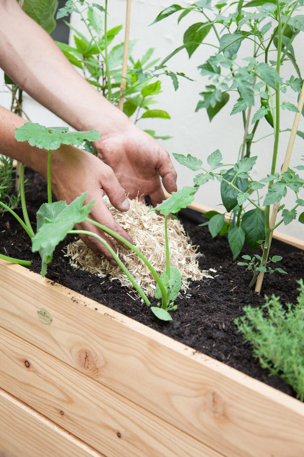 Composer un potager avec les legumes de la ratatouille