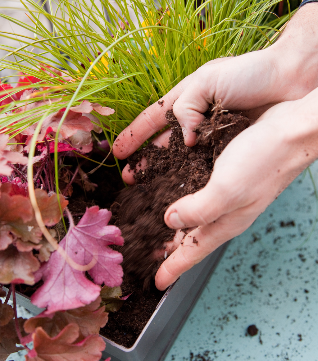 Composer une jardiniere d'automne